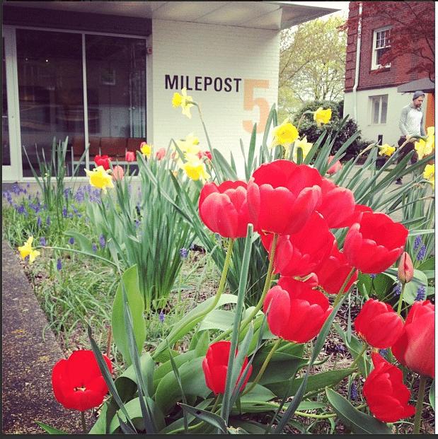 milepost5-tulip